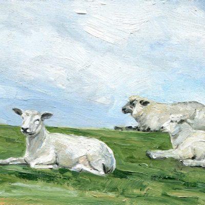 Schafe, Studie, Öl auf Hartfaserplatte, 10 x 15 cm, 2021